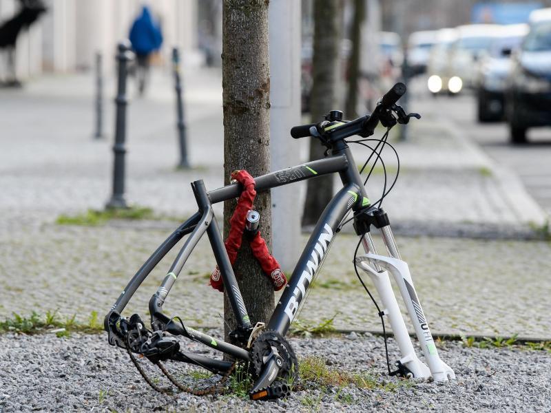 Reifen und Sattel sind weg, nur noch der Rahmen eines Fahrrads ist - hier in Berlin - an einen Baum gekettet. Foto: Jens Kalaene/dpa-Zentralbild/dpa