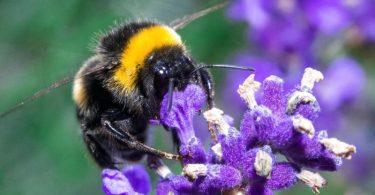 Ein ganzes Paket neuer Regeln soll Insekten mehr Schutz geben. Foto: Jens Büttner/dpa-Zentralbild/dpa