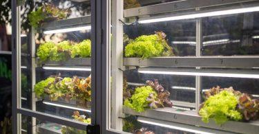 Im Nürnberger Ortsteil Almoshof steht jetzt ein Salat-Automat. Der Salat wird in Rinnen bewässert und wird dem Kunden auf Knopfdruck vollautomatisch ausgegeben. Foto: Daniel Karmann/dpa