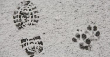 In den Mittelgebirgen wie hier auf dem Brocken im Harz hat es bereits Mitte des Monats ersten Schneefall gegeben. Foto: Matthias Bein/dpa-Zentralbild/dpa