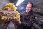 In einem alten Stollen in Saarbrücken züchtet Mirko Kalkum verschiedene Sorten Edelpilze. Foto: Oliver Dietze/dpa