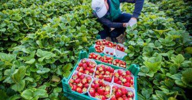 Mit Hilfe einer interaktiven Karte können sich Menschen in Europa künftig darüber informieren, welches Obst und Gemüse in ihrem Land gerade Saison hat. Foto: Jens Büttner/dpa-Zentralbild/dpa