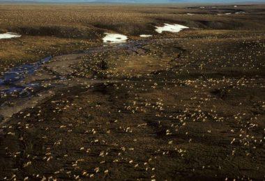 Die Biden-Administration setzt Öl- und Gaspachtverträge in Alaskas Arctic National Wildlife Refuge aus, während sie die Umweltauswirkungen von Bohrungen in der abgelegenen Region überprüft. Foto: Uncredited/U.S. Fish and Wildlife Service via AP/dpa