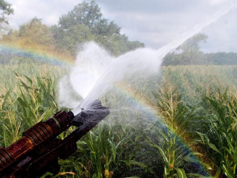 Ein Maisfeld wird bewässert, wobei durch den Sonnenschein ein Regenbogen entsteht. Foto: Julian Stratenschulte/dpa
