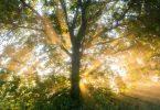 Die aufgehende Sonne in der Leinemasch in der Region Hannover. Der Deutsche Wetterdienst DWD sagt für die nächsten Tage eine Hitzewelle mit Temperaturen von bis zu 37 Grad voraus. Foto: Julian Stratenschulte/dpa