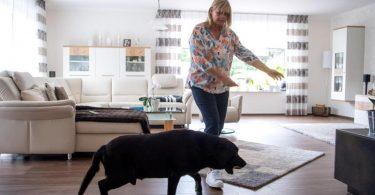 Claudia Kasig trainiert regelmäßig mit Bettwanzenspürhund Jamiro die Suche nach den Schädlingen. Foto: Sina Schuldt/dpa