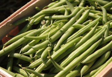 Beliebtes Gemüse: Viele Menschen bauen grüne Bohnen im eigenen Garten an. Foto: Nestor Bachmann/dpa-tmn