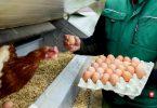 Wer viel mit Hühnern zu tun hat, atmet auch Allergene aus den Federn und dem Tierkot ein. Foto: Uwe Anspach/dpa/dpa-tmn