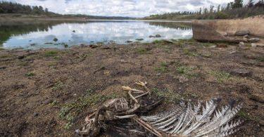 Am Ufer des Penuelas-Sees liegt nach einer Dürre ein toter Vogel. Der Weltklimarat führt die Folgen der menschengemachten Erderwärmung in seinem neuen Bericht drastischer vor Augen als je zuvor. Foto: Miguel Moya/Agencia Uno/dpa
