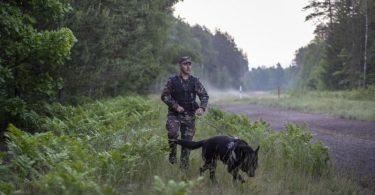 Ein Mitglied des litauischen Grenzschutzes patrouilliert im Juni mit einem Hund an der Grenze zu Belarus. Foto: Mindaugas Kulbis/AP/dpa