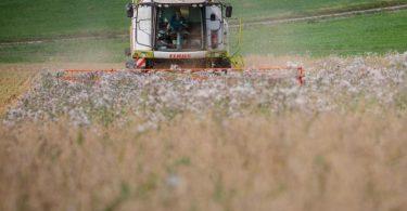 Ernte auf einem Haferfeld. Foto: Christoph Schmidt/dpa