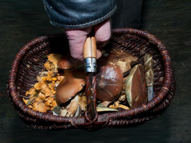 Auf Wiesen und im Wald sprießen zur Zeit überall Pilze. Transportiert werden sie am besten in einem luftigen und stabilen Korb. Foto: Klaus-Dietmar Gabbert/dpa-tmn