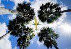 Passagierflugzeuge aus Europa werden zukünftig wieder in die USA fliegen dürfen - zumindest mit Geimpften an Bord. Foto: Gene J. Puskar/AP/dpa