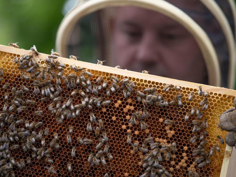 Ein Imker hält eine Bienenwabe in den Händen. Deutschlands Imker haben in diesem Jahr deutlich weniger Honig eingeholt als in den Vorjahren. Foto: Friso Gentsch/dpa/Archiv